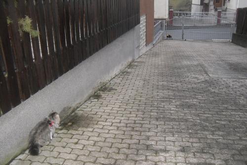1 Katzen fang mich