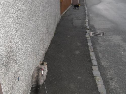 4 Katzen fang mich