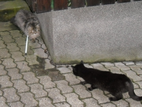 5 Katzen fang mich